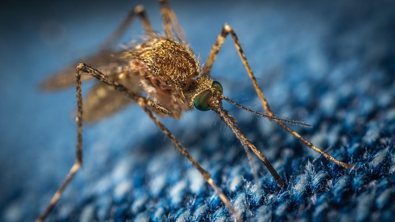 zanzare IPLA