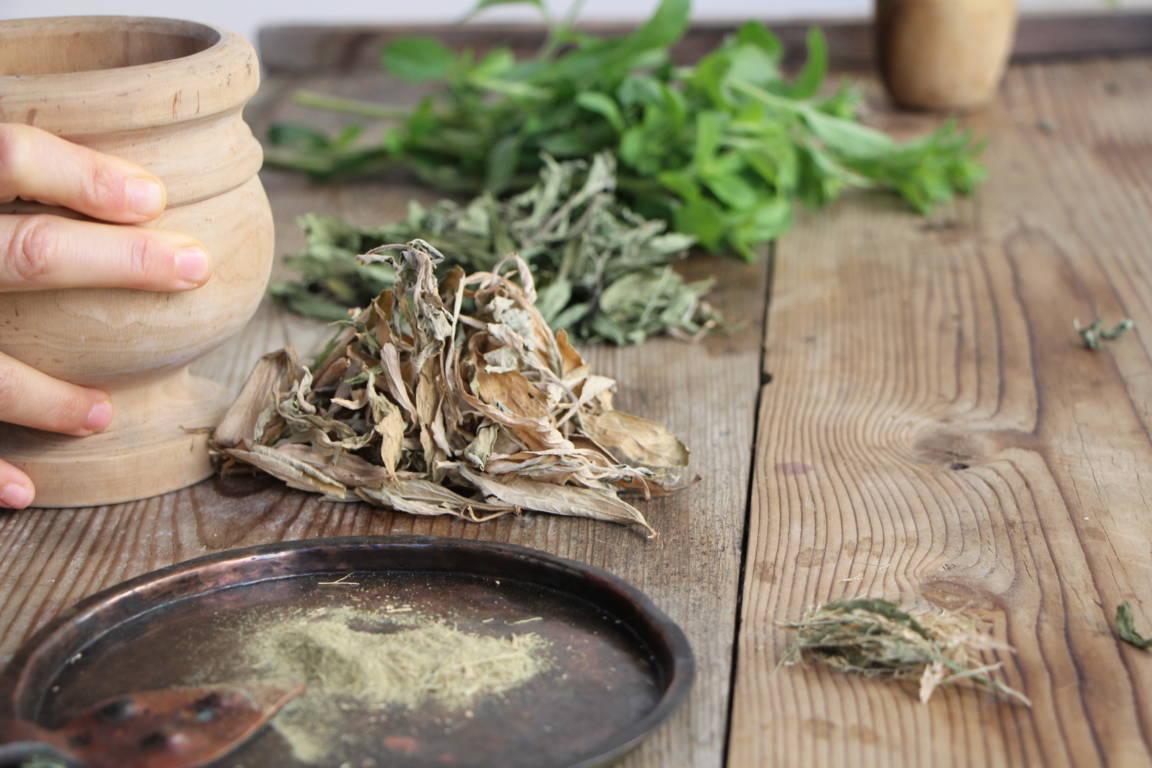 stevia dalla foglia fresca alla polvere