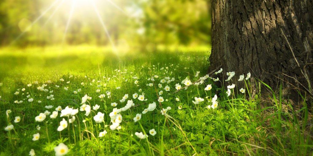 primavera ombra giaja centro studi piemontesi