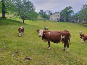 FIT-MILK bovine
