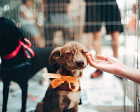 gentilezza cane accarezzato